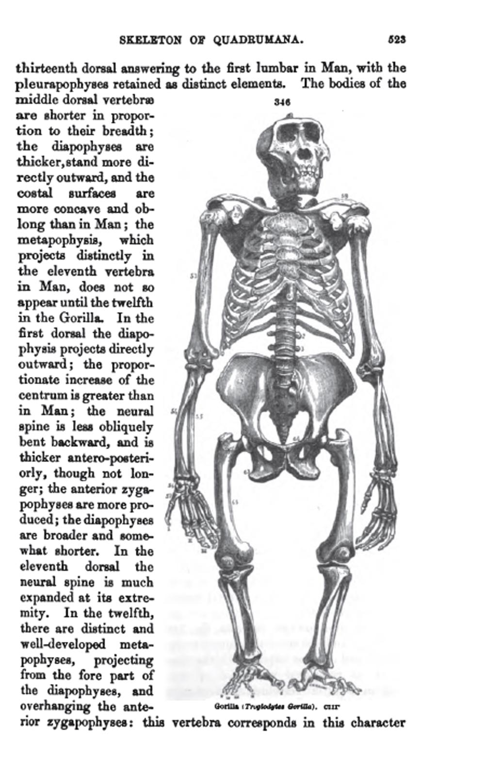 Richard Owen (biografía - cronología - obra) ~ Exóticas Lecturas ...
