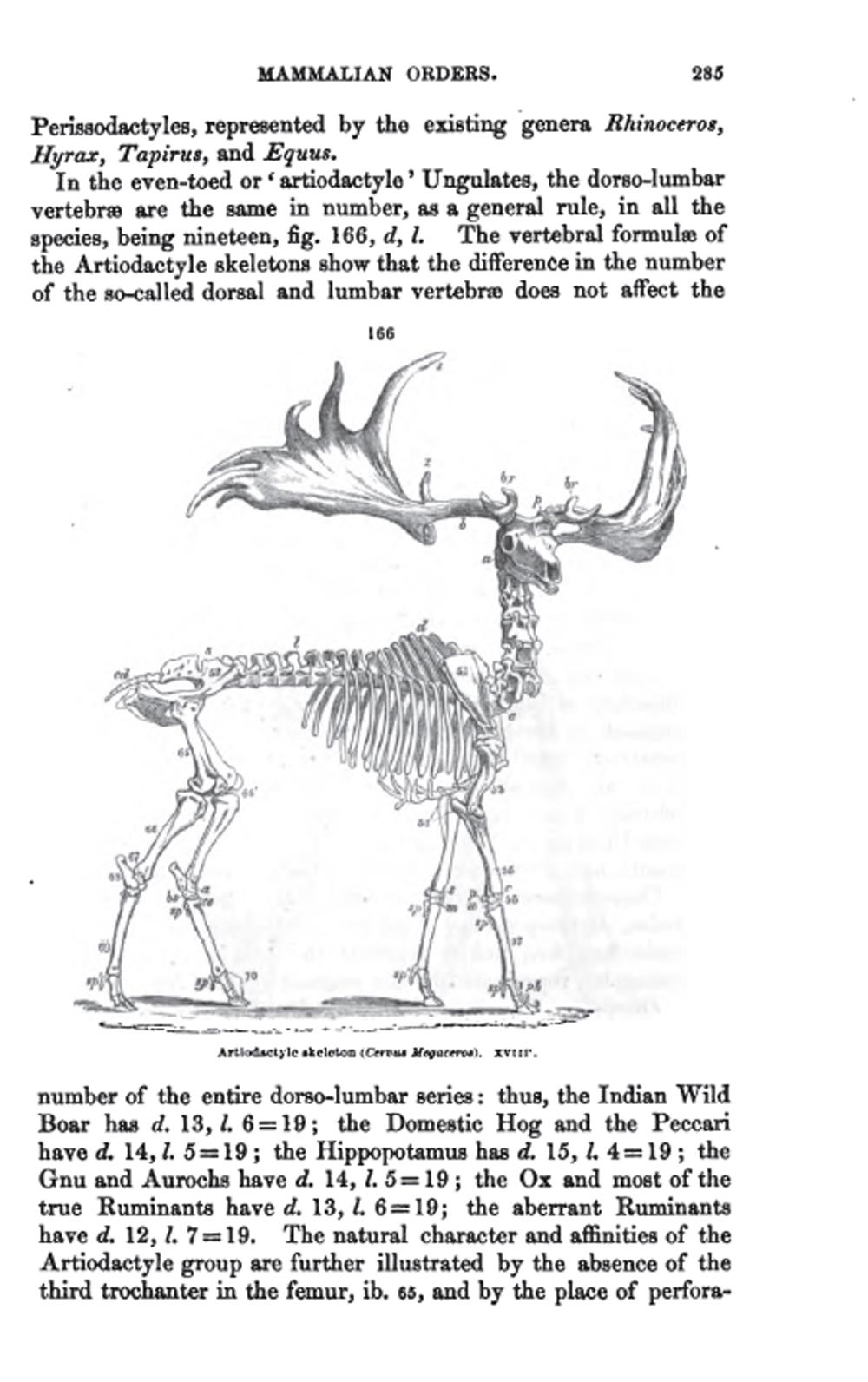 Asombroso Ciervos Anatomía Del Esqueleto Imágenes - Anatomía de Las ...